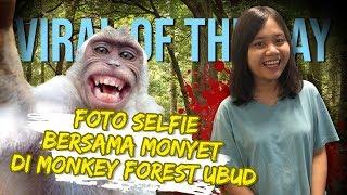 VIRAL OF THE DAY - Viral Foto Selfie Bersama Monyet di Monkey Forest Ubud, Begini Triknya