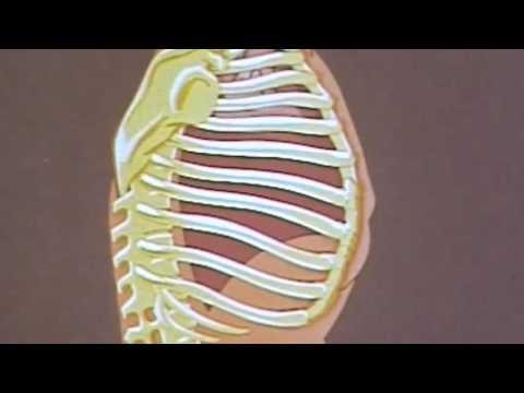 Hüfte Ultraschall in synovitis