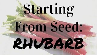 How To Start Rhubarb From Seed