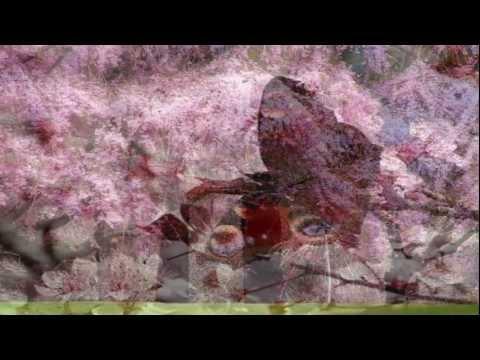 Música A Andorinha Da Primavera
