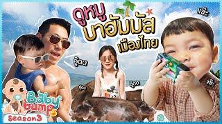 Baby Bump 3 | ไทก้าดูหมู บาฮัมมัส เมืองไทย!!! EP.25