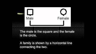Genogram tutorial