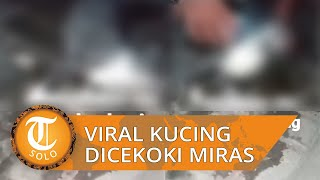 Video Viral Kucing Dicekoki Miras hingga Kejang-kejang lalu Mati, Doni: Tak Akan Diampuni!