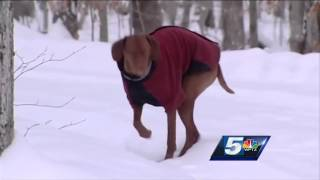 Cold weather can mean problems for pets