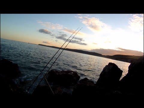 Fiskeri efter havbars fra klipperne i England