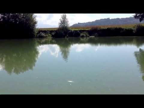 Come disturbare lorzo di perla per pescare su un abramide comune