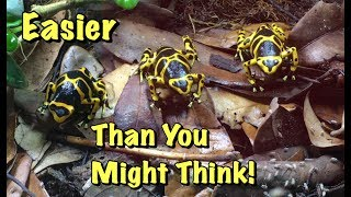 Bumblebee Poison Dart Frogs: Easier Pets Than I Thought!