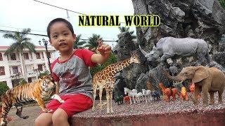 Chơi khám phá các con vật trong rừng | Thế giới động vật | NATURAL WORLD - Tuấn Anh XK