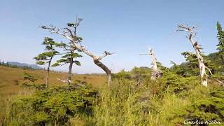 """Xhover Element 5"""" 4S Quad FPV RAW End of Hartney Bay Road"""