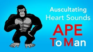 View the video Auscultating Heart Sounds - APE To Man