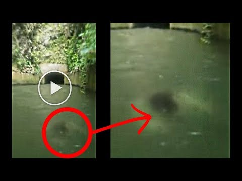 You Won't Believe what she Recorded Swimming Towards her