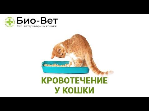 Кровотечение у Кошки - Виды, Причины и Что Делать // Сеть Ветклиник БИО-ВЕТ
