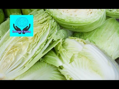 , title : 'The 10 Health Benefits of Chinese Cabbage