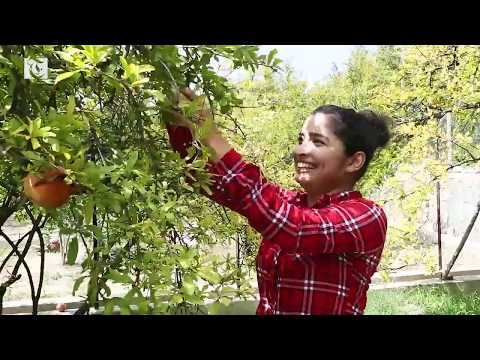 Watch: Pomegranate Picking at Jabal Al Akhdar