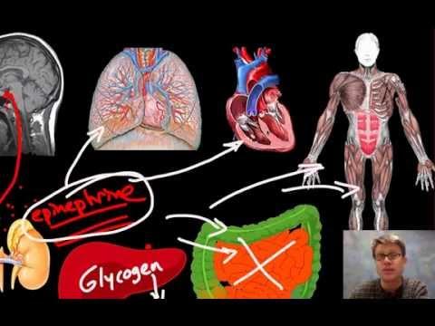Amd Messung des Blutdrucks