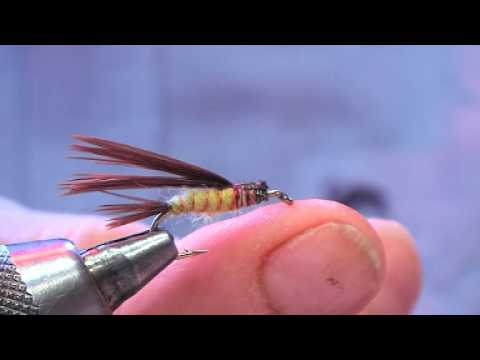 Lauries mayfly nymph