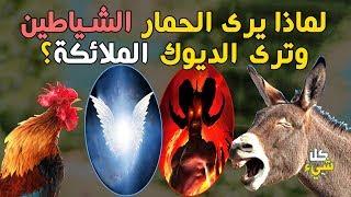 لماذا يرى الديك الملائكة ويرى الحمار الجن والشياطين؟   تفسير مذهل   سبحانك ما خلقت هذا باطلا