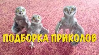 Смешные видео моменты Приколы Фейлы / Лучшая подборка приколов #8