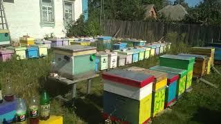 Пчеловодство.На пасеке Булатова ,Измайлова ,Олейника.