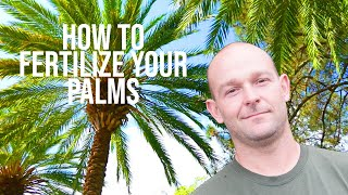 How To Fertilize Your Palms - O'Neil's Tree Service