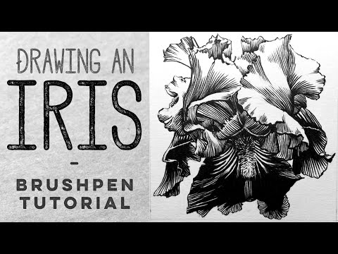 Drawing an Iris by Gee | Using a Pentel Pocket Brush