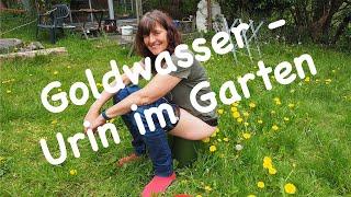 Goldwasser - Urin im Garten