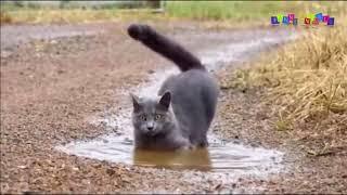 Просто приколы с котанами  Нарезка #6