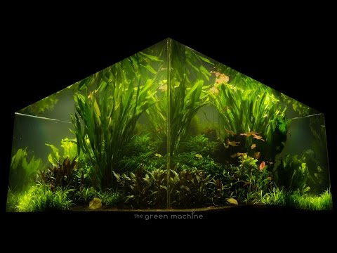 Nature's Chaos Transformed into a Jungle Aquascape by James Findley