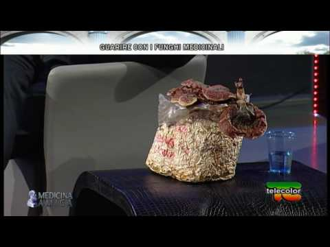 La tartaruga di krasnoukhy come trattare un fungo