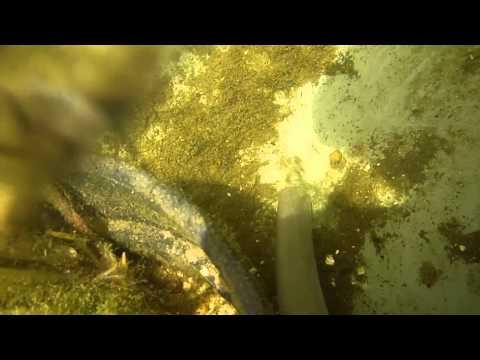 aspiradora estanque