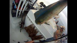 Fishing POV Fisherman's Landing Condor 1.5 day 9/9/14 Limits Dorado