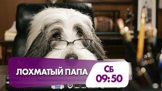 """Лохматый папа"" в субботу на НТК!"