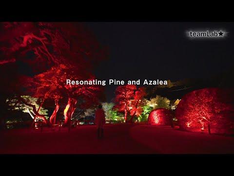 Resonating Pine and Azalea
