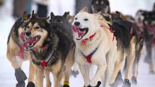 Four Legged Leaders: The Serum Run Sled Dogs