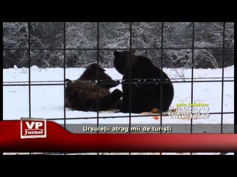 Ursuleții atrag mii de turiști