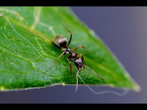 Hausmittel gegen Ameisen - Tipps vom Balkon Gärtner Christian