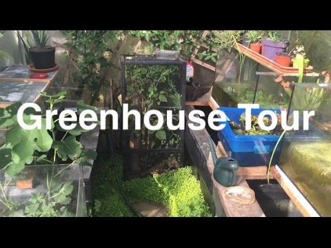 Reptile & Amphibian Greenhouse Tour 2016
