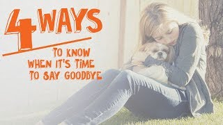 4 Ways to Know When It's Time to Say Goodbye -- Cone of Shame with Dr. Andy Roark