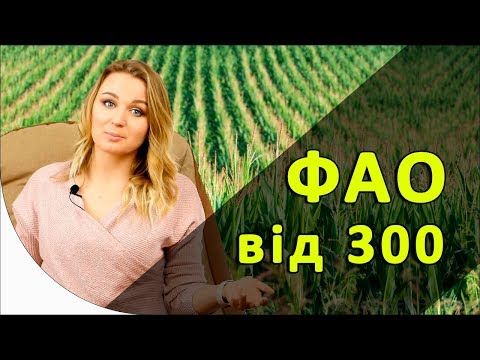 Новинки гибридов кукурузы с ФАО от 300