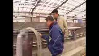 Completely farm raised bluefin tuna