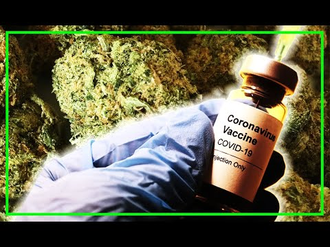 FREE WEED With Covid Vaccine In Washington State! (Seriously)