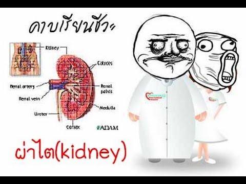 การรักษา antiparasitic ของ Giardia