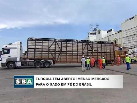 Turquia abre imenso mercado para o gado em pé brasileiro