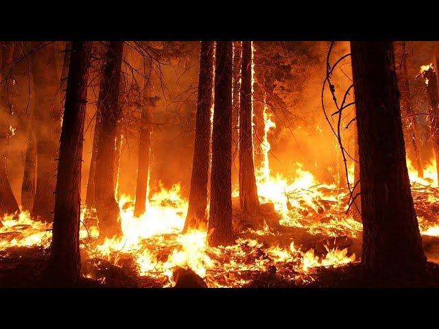В округе продолжают гореть леса