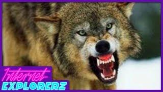 Real Life Wolf Battle Royale   Internet Explorerz (Ep. 10)