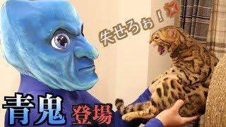 """ガチトラウマ!!猫たちの前に""""リアル青鬼""""が現れた結果・・・"""
