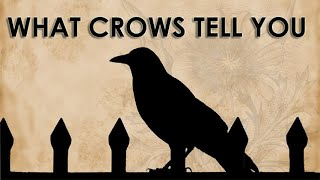 Seeing A Crow Signs And Omen