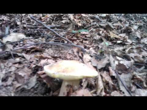 Il fungo tra gambe a uomini come trattare