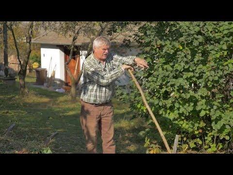 Giardia green poop