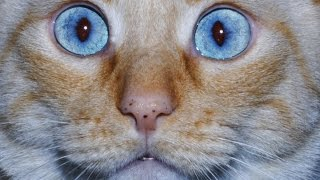 5 Purrrfect Hacks Every Cat Owner Should Know